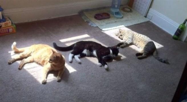 pets-sunlight-02
